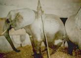 © www.animal-public.de - kranke Rani - 002