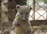 Nasenbär im Zoo