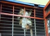 Affe im Zirkus