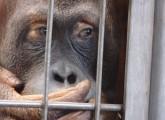 Säugetiergutachten Zoo Kritik