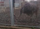 Verdreckte_Emus (5)