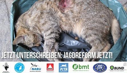 banner-jagd-nrw-katze