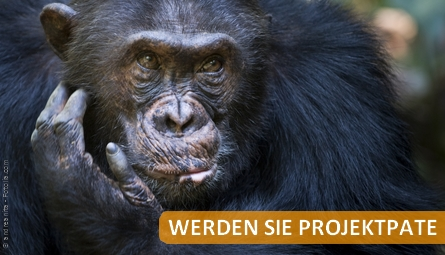 banner schimpansenpatenschaft