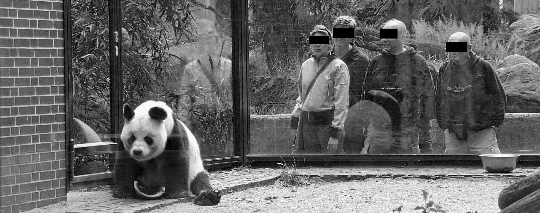 banner-panda
