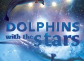 dolphins with the stars