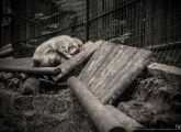 animals-in-european-zoos-a-photo-exhibition-c-britta-jaschinski_30170976395_logo