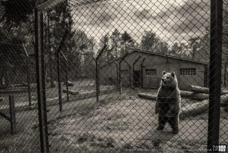 animals-in-european-zoos-a-photo-exhibition-c-jo-anne-mcarthur_30136266016_logo