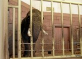 Zoo Berlin Elefanten
