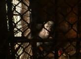 schimpanse-gärtnerei-1