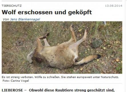presseausschnitt erschossener wolf2