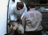 animal public rettet Zirkustiere!
