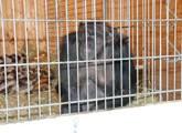 Zirkus-Schimpanse Fredy gerettet