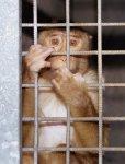 Tierpark-Affen in Versuchslabor?
