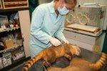 AAP eröffnet neuen Säugetierkomplex