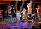 Zirkus: Manege frei – von Wildtieren