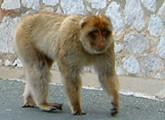Affenpark auf Rügen wird nicht gebaut!