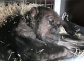 Tierpark Kalletal: Alle Tiere vermittelt