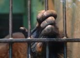Tierschutzerfolg: Europäisches Parlament will Wildtiere in Gefangenschaft besser schützen