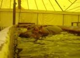 Bundestierärztekammer fordert Verbot von Wildtieren im reisenden Zirkus