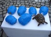 Reptilienschmuggler gefasst: Zoll beschlagnahmt sieben Schildkröten