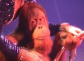 Verbände fordern Verbot der Wildtierhaltung im Zirkus