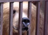 Endlich! Tierpark Lübeck schließt!