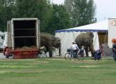 Montabaur Stadtrat erwägt Wildtierverbot in Zirkussen