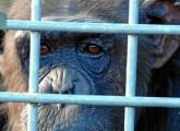 Cocos Leben im Zoo