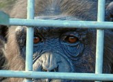 Zootiere – unschuldig hinter Gittern