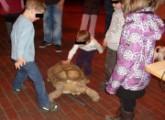 Reisende Reptilien-Ausstellungen müssen verboten werden