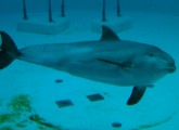 Delfinarien verstoßen gegen EU-Gesetzgebung