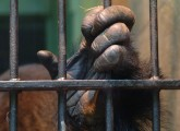 animal public unterstützt Great Ape Project