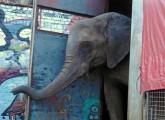Österreich: Wildtierverbot im Zirkus bleibt
