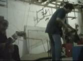 Videobeweis: Tierquälerei bei Zirkusdressur