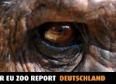 Deutsche Zoos verstoßen gegen EU-Zoorichtlinie