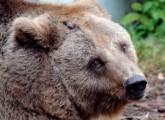 Bärenzwinger: Strafanzeige gegen Leiter des Veterinäramtes erstattet
