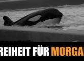 Helfen Sie Orca Morgan zurück in die Freiheit