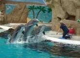 Nordrhein-Westfälischer Landtag beschäftigt sich mit Antrag zum Verbot von Delfinarien