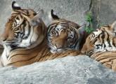 Europäische Zoos töten jedes Jahr 5000 gesunde Tiere