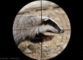 Online-Protest: Tierquälerische Jagdmethoden verbieten!