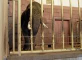 Chance auf umfassenden Schutz für Zootiere verpasst