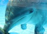 animal public begrüßt Engagement Remmels gegen Delfinarien