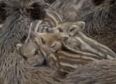 Nach Tiertötung: animal public erstattet Anzeige gegen Berliner Tierparkdirektor