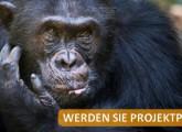 Affenpate werden