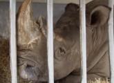 Massive Tierschutzverstöße im Zirkus