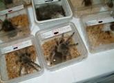 animal public kommentiert NRW Gefahrtiergesetz