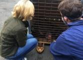 Mimi und Dolly gerettet: Schimpansen aus Wedemark in niederländischer Auffangstation eingetroffen