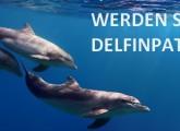 Delfinpate werden