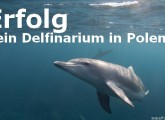 Protestaktion: Kein Delfinarium in Polen