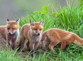 Bündnis Jagdreform Hessen fordert mehr Tierschutz im hessischen Jagdrecht